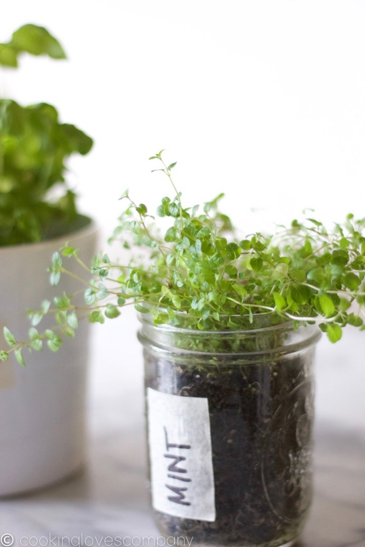 Sprigs of mint sprouting out of a mason jar